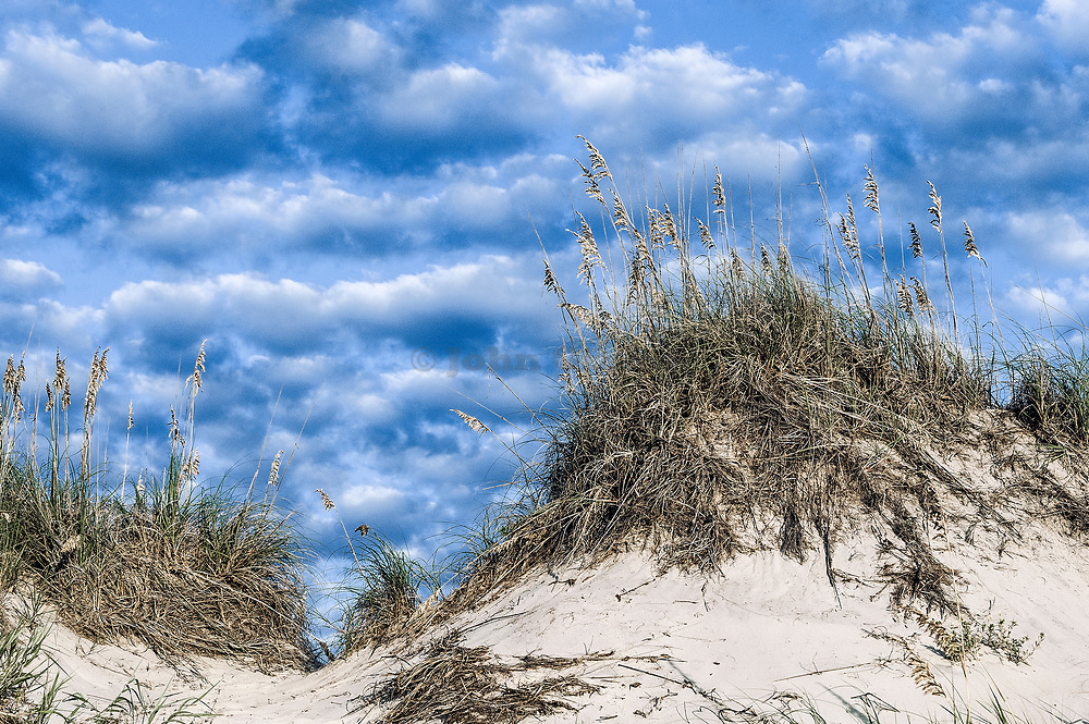 Dune mound and sea oats, Outer Banks, North Carolina, USA.