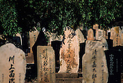 Broome. Pearls  divers old cemetery, japanese section (the largest contingent of divers).