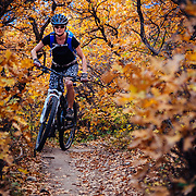 Ashely Rankin rides through Gamble's Oak in Carbondale Colorado during peak autumn color.