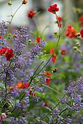 Helen's Garden in Saffron Walden