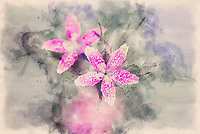 Two wildflowers with a watercolor effect.