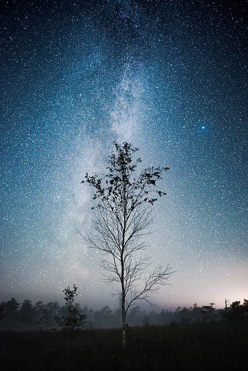 Birch tree (Betula pubescens) with stars of Milky Way behind it in raised bog, Ķemeri National Park, Latvia Ⓒ Davis Ulands | davisulands.com