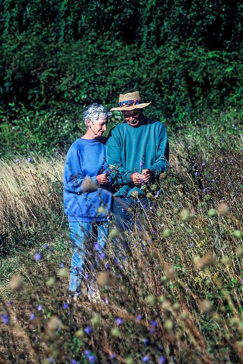 Senior couple walking and picking wild flowers.