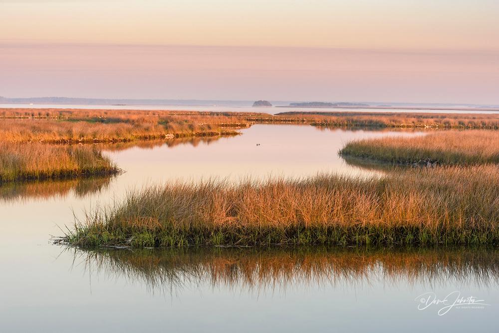 Salt water marshes at dawn, St. Marks NWR, Florida, USA