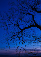 Graphic pattern of tree branches silhouetted against twilight blue sky, just after sunset, Lake Champlain, Vermont