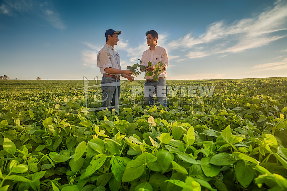 Produtores inspecionam lavoura de soja, em Campo Mourão no Paraná. FOTO: Jefferson Bernardes/ Agência Preview