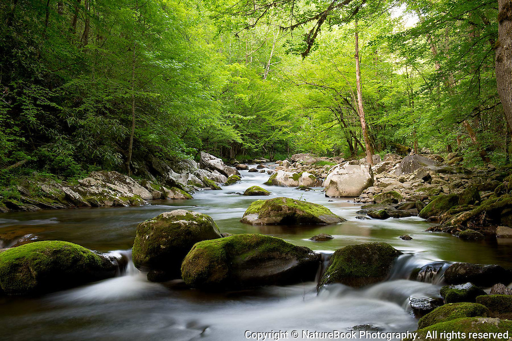 Spring is in full swing in the Smokies as the rocks and quiet stream fill the spirit with solitude and beauty.