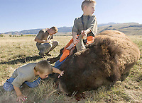 Ryker Case, 5, and his brother, Jacob, 7, investigate the bull bison shot by their father, Ryan, of Evanston on the opening day of the bison hunt on the National Elk Refuge in September 2007. Case's animal was the first kill of the first bison hunt on the refuge since 1989.
