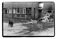Dogs on the Shooters Hill, SE10, London. South-East London, 1982