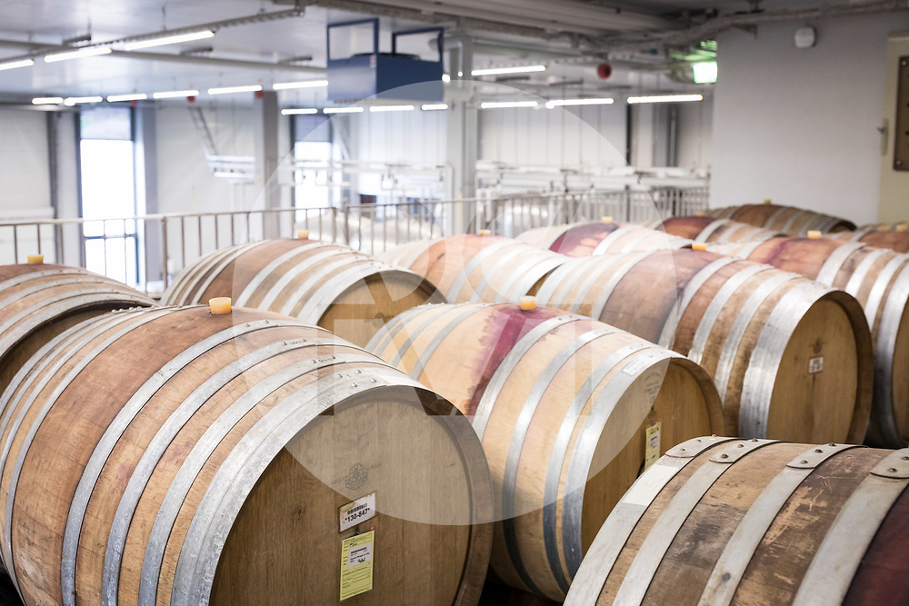 SCHWEIZ - TOLOCHENAZ - Weinfässer im Weinkeller Cave de la Côte, hier wird Rotwein in Barriquefässern gelagert - 23. Januar 2020 © Raphael Hünerfauth - http://huenerfauth.ch