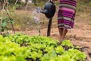 Rio Pardo de Minas_MG, Brasil.<br /> <br /> Cisternas instaladas em residencias da comunidade de Peixe Bravo. Na foto, mulher regando alfaces.<br /> <br /> cistern installed on Peixe Bravo community residences. In this photo a woman watering for lettuce.<br /> <br /> Foto: LEO DRUMOND / NITRO