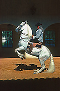 SPAIN, ANDALUSIA JEREZ DE LA FRONTERA; the Royal School of Andalusian Equestrian Art, origin of the Spanish Riding School of Vienna