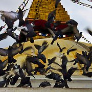 Pigeons scatter in front of the all seeing eyes of Buddha at Bodhanath Stupa, Kathmandu.