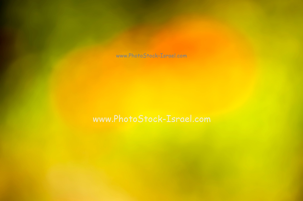 Blurry, Out of focus, abstract spring bloom in red green and yellow