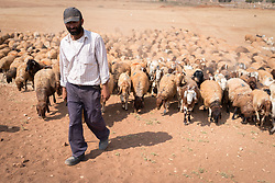 6 October 2018, Jordan Valley, West Bank, Occupied Palestinian Territories: 40-year-old Deab Abu Malik herds his sheep in the Jordan Valley on the West Bank. Ecumenical Accompaniers from the World Council of Churches Ecumenical Accompaniment Programme in Palestine in Israel accompany shepherds in many parts of the West Bank, providing an international presence known to have a mitigating effect on confrontations between Israeli settlers and the Palestinians. EAs' presence also helps Palestinians access lands they otherwise might not have dared to continue to cultivate. In the West Bank's Area C, any land that isn't cultivated for a period of three years becomes property of the state, the shepherds explain, so accessing their lands regularly is vital for the communities and their herds.