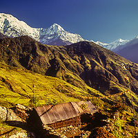 Verdant rice paddies stretch up the lower slopes of the Annapurna massif in the Nepal Himalaya.near Ghandrung village.