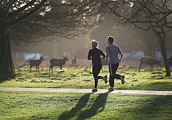 © Licensed to London News Pictures. 31/12/2015. London, UK. Joggers run past a herd of deer in Bushy Park. Photo credit: Peter Macdiarmid/LNP
