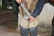 Farrier preparing a horse's hoof treating the hoof