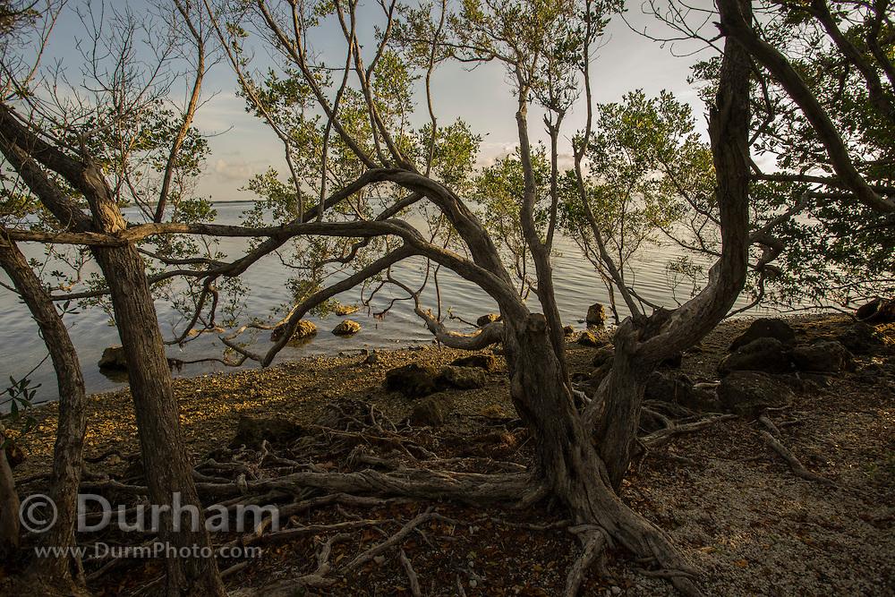 Biscayne National Park, Florida.