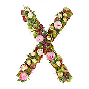 Capital Letter X Part of a set of letters, Numbers and symbols of the Alphabet made with flowers, branches and leaves on white background