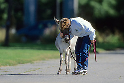 Woman Taking Donkey For A Walk