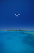 Image of a bird in flight over Lady Musgrave Island, Great Barrier Reef, Australia by Randy Wells
