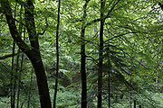 Woodland trees along a nature trail in Shropshire on 6th June 2021 in Ludlow, United Kingdom.