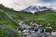 A small waterfall on Edith Creek in Mount Rainier National Park during wildflower season at Paradise, Washington State, USA