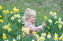 © Licensed to London News Pictures 25/03/2021. Royal Tunbridge Wells, UK. A young girl with the spring daffodils at Dunorlan Park in Royal Tunbridge Wells, Kent enjoying the bright sunny weather. (permission given from parent)  Photo credit:Grant Falvey/LNP