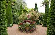 Terracotta pots filled with Fuchsia, Petunias, and Geranium surrounded by Taxus fastigiata baccata (Irish Yew) in East Ruston Old Vicarage, East Ruston, Norwich, Norfolk, UK