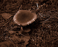 Mushroom at my Doorstep. Backyard Summer Nature in New Jersey. Image taken with a Nikon D4 camera and 80-400 mm VRII lens (ISO 800, 400 mm, f/5.6, 1/400 sec). Raw image processed with Capture One Pro, Focus Magic, NIK Define, and Photoshop CC 2014.