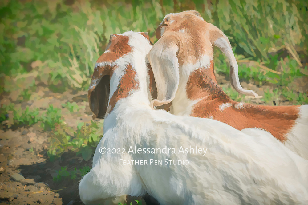 Two young brown and white Nubian goat kids sitting outside the barn together on a sunny day.  Blend of photorealism and painted effects.