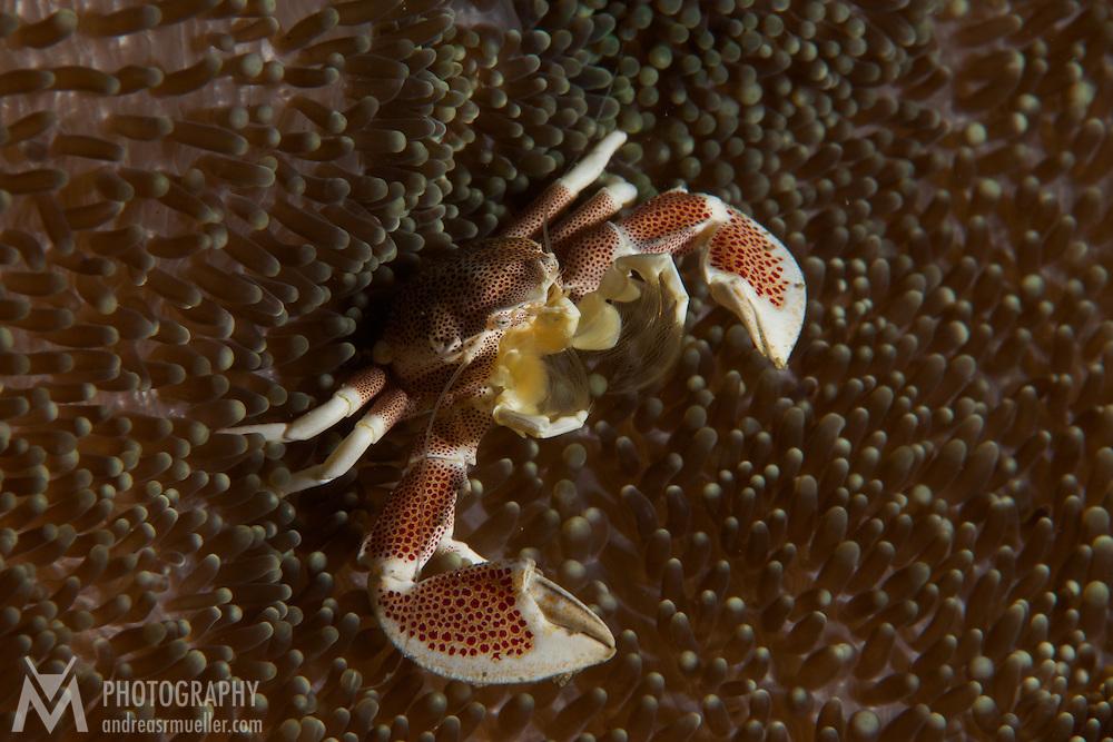 Dive Spot: Critter Hunt