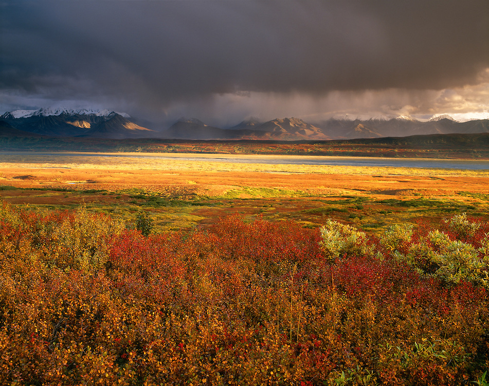 USA, Alaska, Denali NP, Late afternoon light penetrates under the cloud layer looking across the tundra towards the Alaska Range