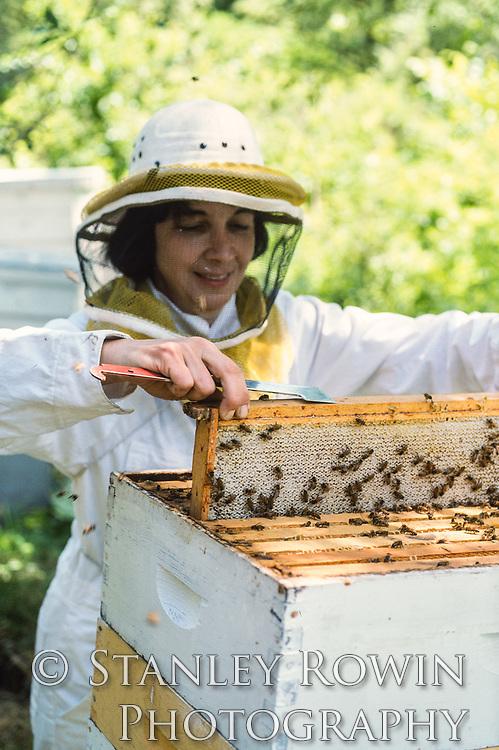 Beekeeper combing for honey in the bee hive