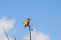 The European Roller is the only member of the roller family to breed in Europe. Kruger National Park, the largest game reserve in South Africa.