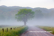 66745-04819 Hyatt Lane in fog Cades Cove Great Smoky Mountains National Park TN
