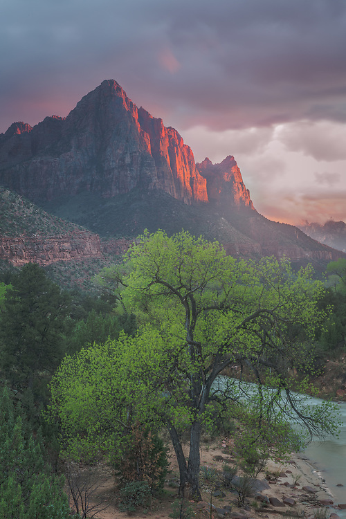 As the storm slowly passed, the last rays of the setting sun cast a magical glow over Zion Canyon.
