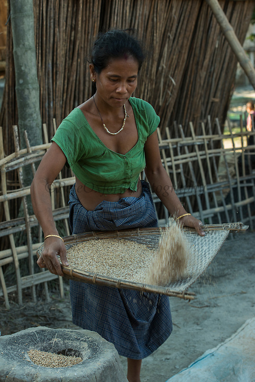 Mising winnowing rice<br /> Mising Tribe (Mishing or Miri Tribe)<br /> Majuli Island, Brahmaputra River<br /> Largest river island in India<br /> Assam,  ne India