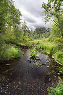 Pepin Brook flows through Aldergrove Regional Park in Aldergrove, British Columbia, Canada. Pepin Brook is home to endangered fish species including the Salish Sucker (Catostomus sp.) and Nooksack Dace (Rhinichthys cataractae).