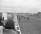 Irish Derby 1973