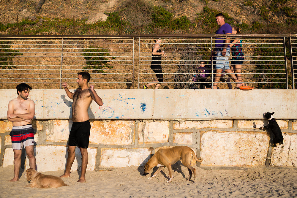 Israelis enjoy a warm summer afternoon with their dogs at the Dog Beach in Tel Aviv, Israel, on July 21, 2015.