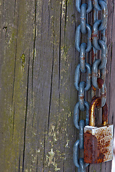 12 February 2010: A padlock and chain hang on a hedgepost, securing nothing.  The Prairielands, Northern McLean County, Illinois