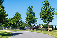 Riding Horse, Bridgehampton, NY