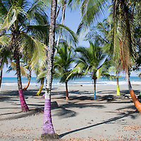 Painted palm trees line the beach just south of Limon, Costa Rica on April 2, 2009.  This region of the country is dominated by a Caribbean culture, and can feel more like Jamaica than a Central American country.    (Photo/Billy Byrne Drumm)
