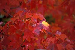 Stock photo of Autumn foliage