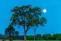 Moon rise, Kwara Camp, Okavango Delta, Botswana.