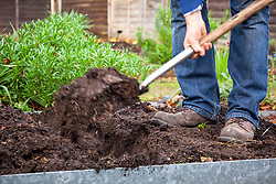 Digging over a bed in the vegetable garden before winter