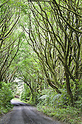 Tree Covered Driveway, New Zealand