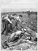 Gang System: teams of children were formed by contractor or 'ganger' and hired out to farmers as agricultural labour for tasks such as sowing and hoeing. Worked 8 or 9 hours a day and often had to walk 3 or 4 miles to and from work. Practice particularly widespread in East Anglia. Wood engraving c 1885.